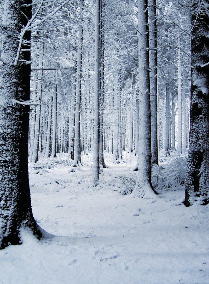 Hình Phong Cảnh Mùa Đông Snowforest