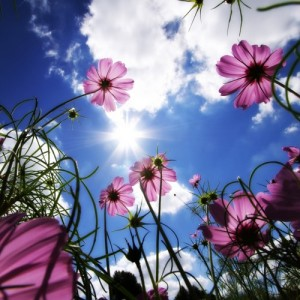 louis macneice sunlight on the garden