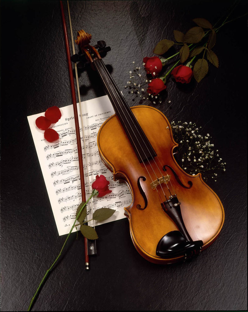 classical music flowers persian violin violinist iranian un violino violines contemporary violins sevenponds background wallpapers roses rose ceremonies common remembrance