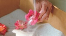 041103022_cleaning_dried_flower_lg-300x174