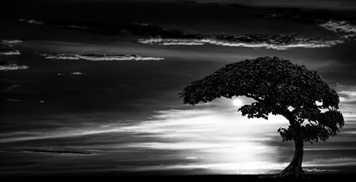 Darkness with moon and tree and clouds