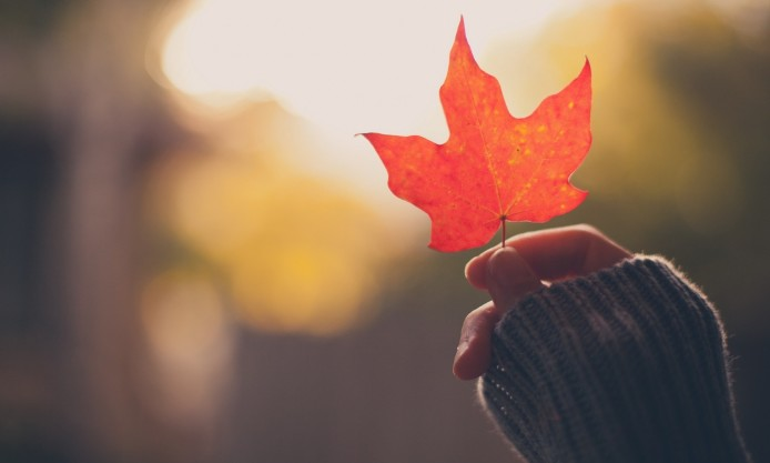 girl-hand-holding-an-autumn-red-maple-leaf-694x417