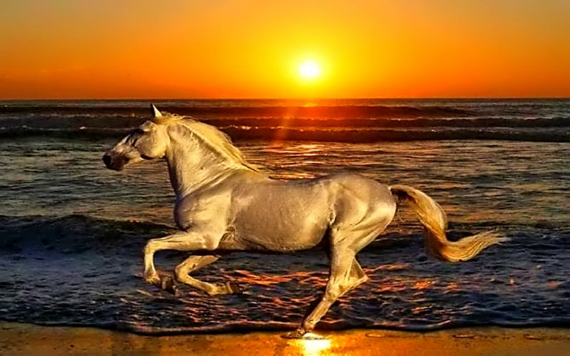 sunset beach animals shore horses running 1280x800 ...