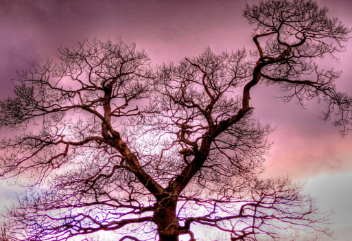 bare tree under gathering clouds