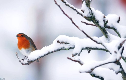 A lone bird perched on a snowy branch