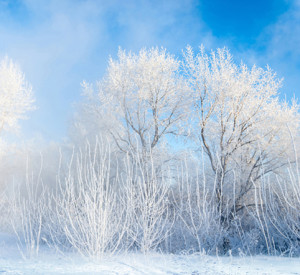 winter trees against a pale blue sky