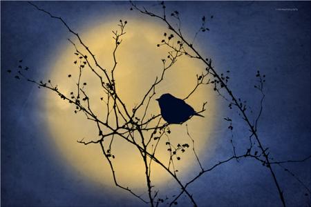 bird on a branch against night sky