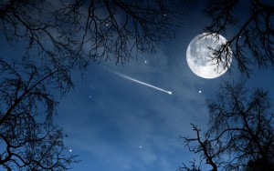 shooting star through trees