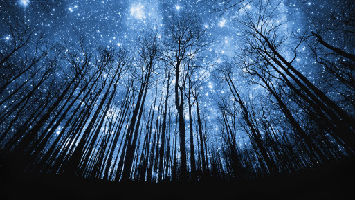 Trees against a backdrop of stars