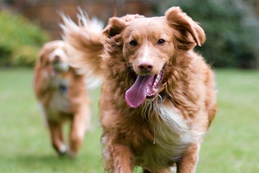 Two dogs full of joyful life
