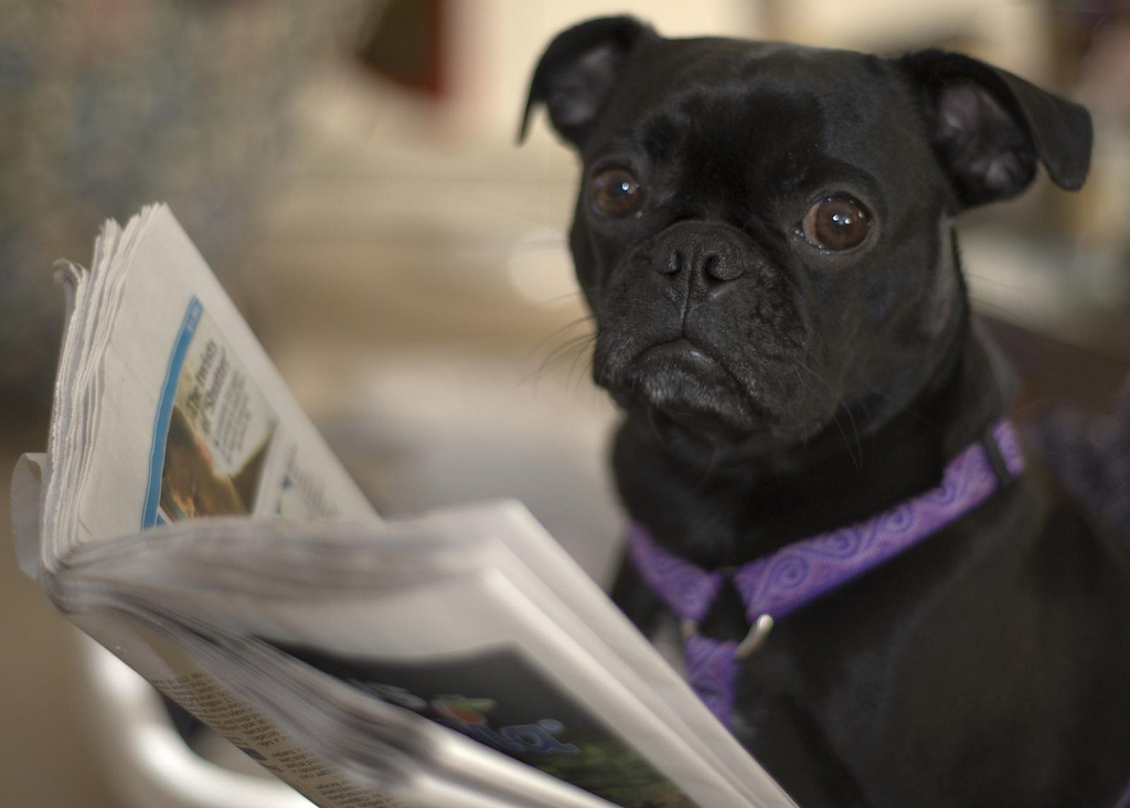 obituary reading dog
