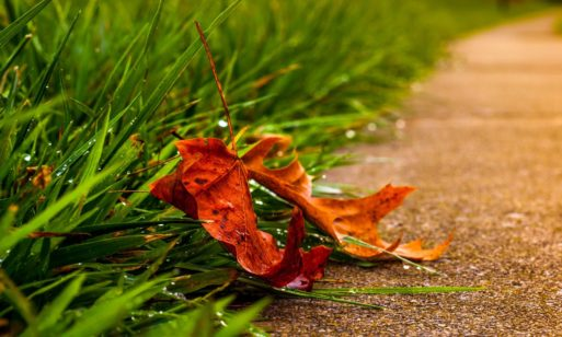 A leaf lies on the ground alone..symbolizing vulnerability