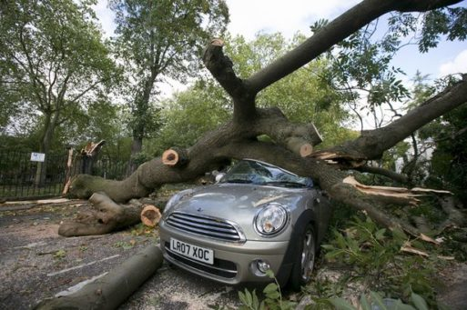Fallen tree on a car after a storm as described in Remnant