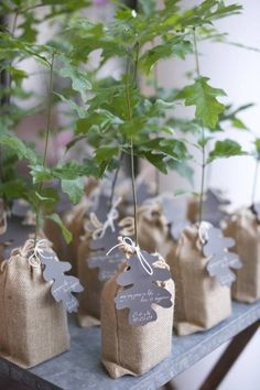 seedlings are an example of small memorial gifts