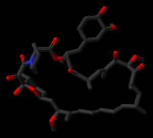 Stick model of the rapamycin molecule