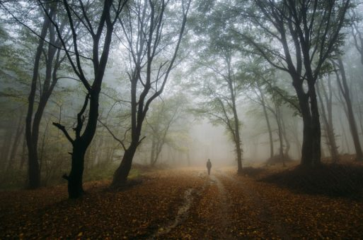 long person walking in a forest in fog