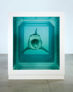 Frontal view of a shark suspended in a tank of formaldehyde