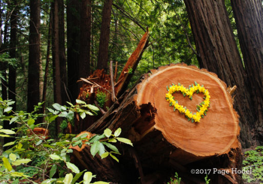 Heart made of flowers on a tree stump in woods