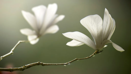 New flowers in a branch show how body image can be reformed