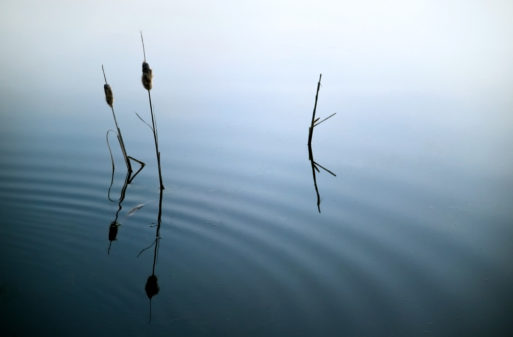 Cat tails in fog symbolize emerging from guilt and shame