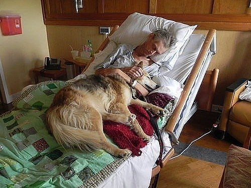 Dying person with pet may be helped by Pet Peace of Mind