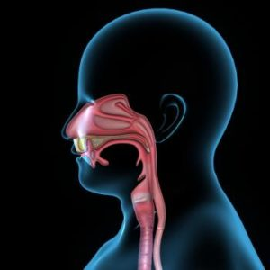 Diagram of normal mouth and throat and esophagus, which are affected by dysphagia