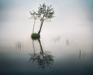 A lone tree in water symbolizes guilt and shame