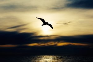 Seagull flying in front of the setting sun along the coast symbolizing grief