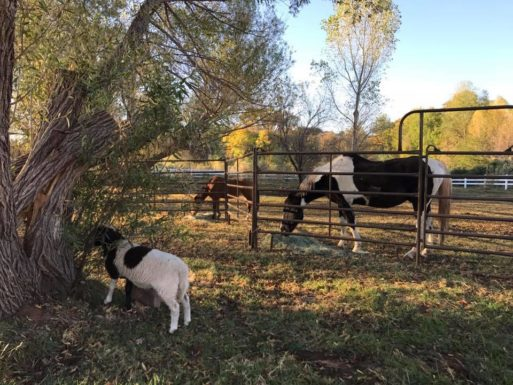 Rescued animals at the care farm help people integrate traumatic grief