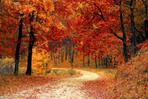 A path through the woods in fall leads to thinking about anticipatory grief