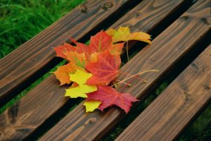 Fall foliage symbolizes death and dying