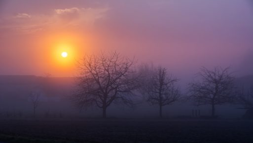 Sunrise over trees against purple sky