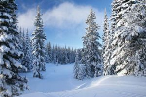 snow covered pine trees delight children with cancer