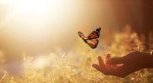 letting go of a butterfly