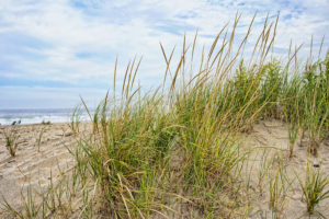 Sand dunes at the beach are a place to make memories