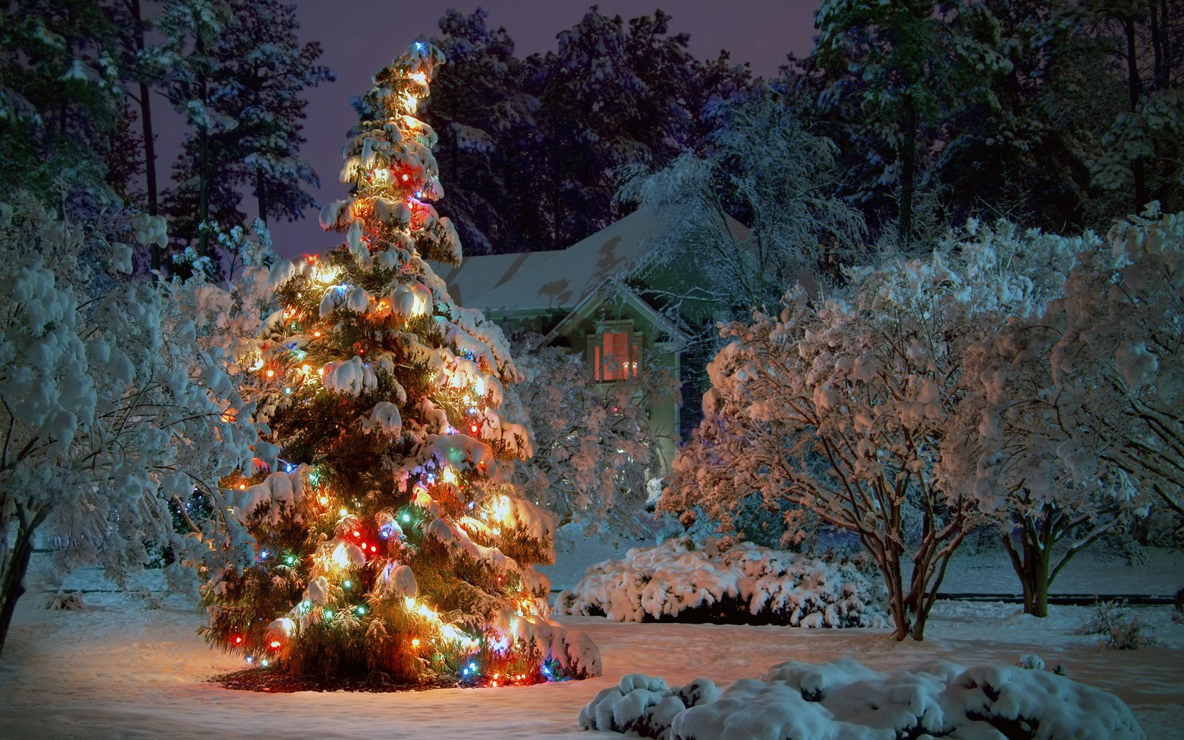 lighted christmas tree and this new year wallpapers christmas tree in the snow and lights 047793