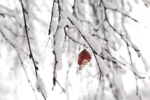 snow covered trees delight children with cancer