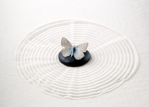 Zen stone with butterfly symbolizes dying well