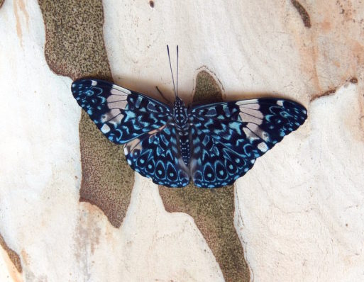 butterfly on rock dying well