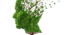 Graphic of a human head portrayed as a tree with leaves falling away symbolizing memory loss.
