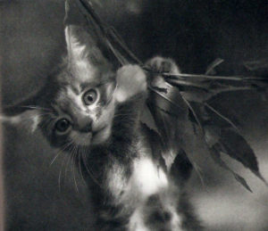 """A photo of a kitten from """"The Blue Day Book"""""""